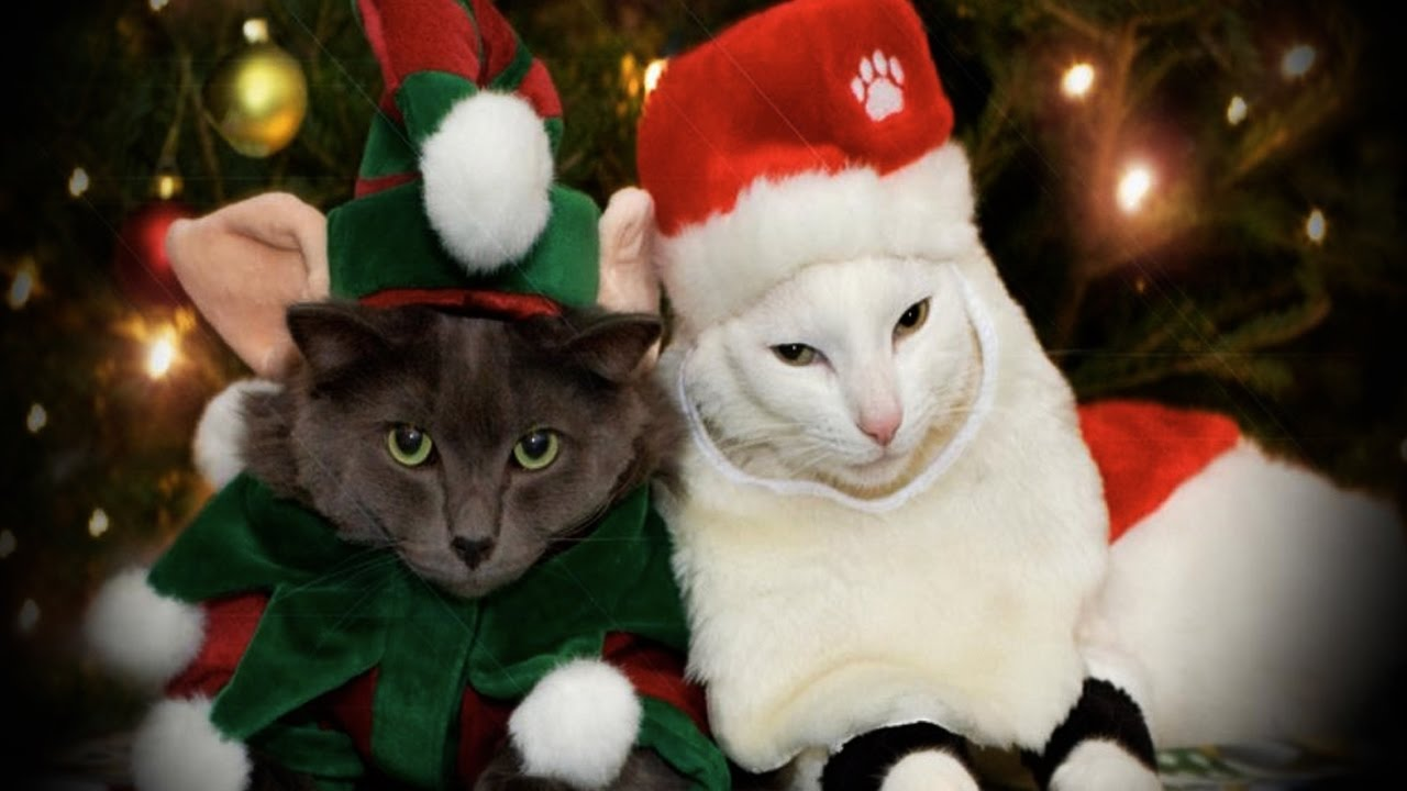 Here Are Some Photos Of Pets Wearing Christmas Costumes