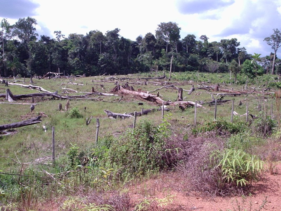 Government is studying privatizing land in Amazon region