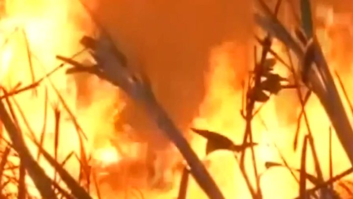 Fires Have Already Destroyed at Least 61,000 Hectares in Paraguay
