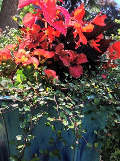 IMG_3340 Our Backyard (10)