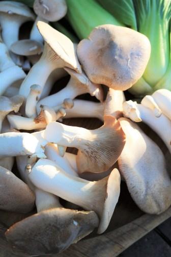 Trumpet mushrooms