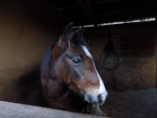 this is one of our two horses