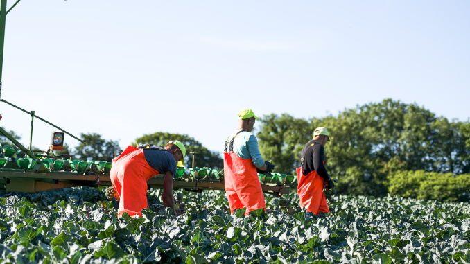 revoluția agricolă și munca la domiciliu