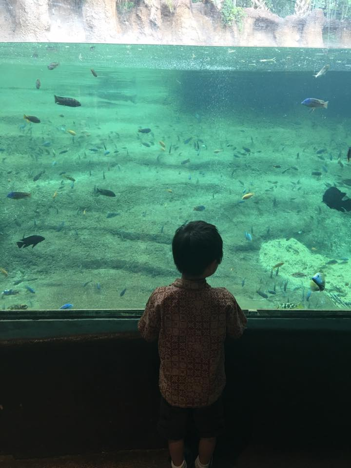 5 reasons to check out Bug Mania at the San Antonio Zoo Ripped Jeans and Bifocals