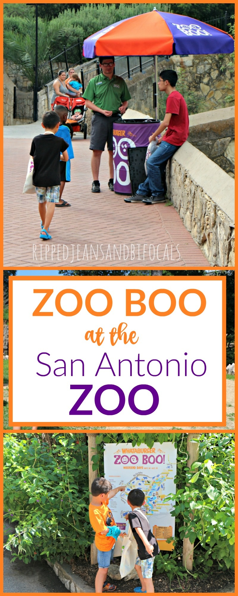 Zoo Boo at the San Antonio Zoo|Ripped Jeans and Bifocals