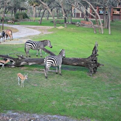 Deluxe Villas at Disney's Animal Kingdom Lodge