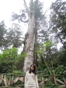 In front of the giant tree