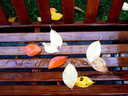 fallen-leaves-on-bench-webpage