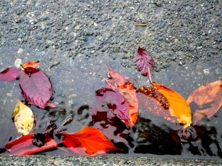 leaves-in-gutter-webpage