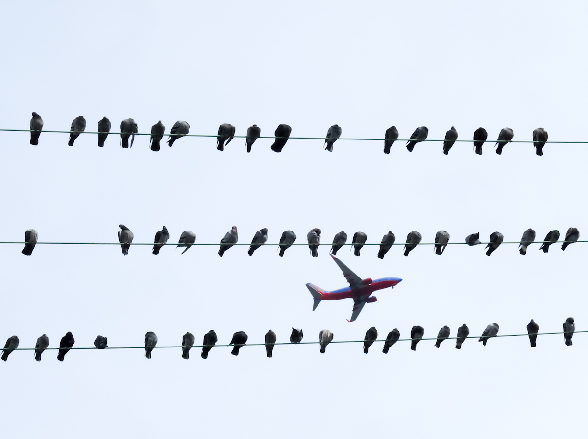 Birds on a wire frame an aeroplane in the sky