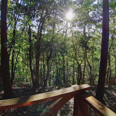 コテージ 部屋からの眺め 朝日 森の中 ロマンの森共和国 おすすめ