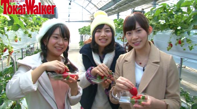 SKE48 × 東海ウォーカー 「SKE48のアルイテラブル!」 レポート編 第15回の動画が公開