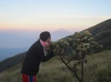 18. mencium edelweis
