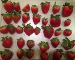 prepping strawberries for storage by freezing them individually first