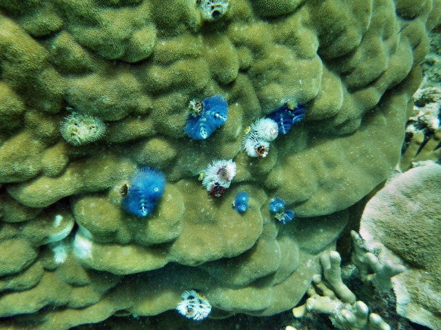 Coral in the Great Barrier Reef, Eddy Reef off Mission Beach. Photo Credit: Paul Toogood/ Flickr (CC By 2.0)