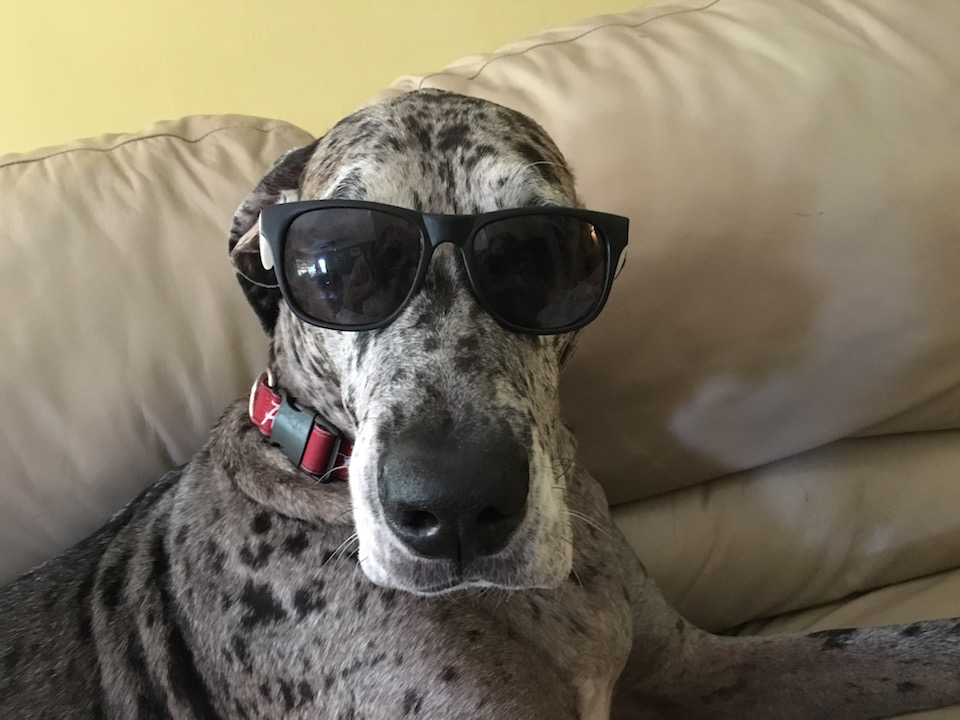 See this cool dog gets it. Photo Credit: Rich Robinson/ RISE NEWS
