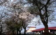 八幡平ライジングサンホテル桜
