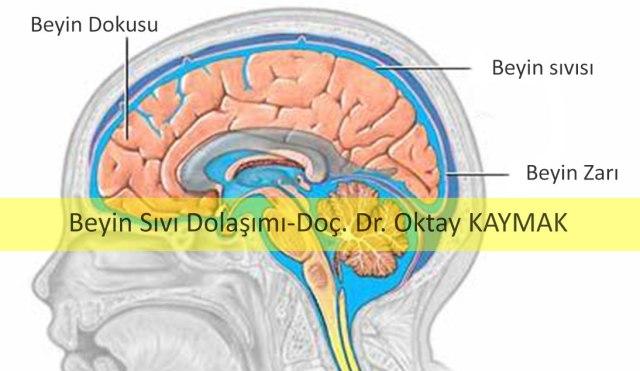 bebeğin-beyin-sıvısı-dolaşım-resmi