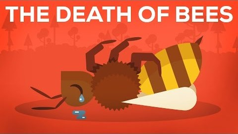 If These Bees Die, So Does One-Third of The Food You Consume