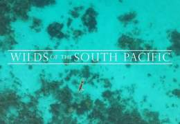 Take An Ambient Journey Through the South Pacific