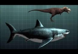 The Tyrannosaurus Rex of Sharks