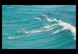 Best Big Wave Surfers In The World – Dolphins