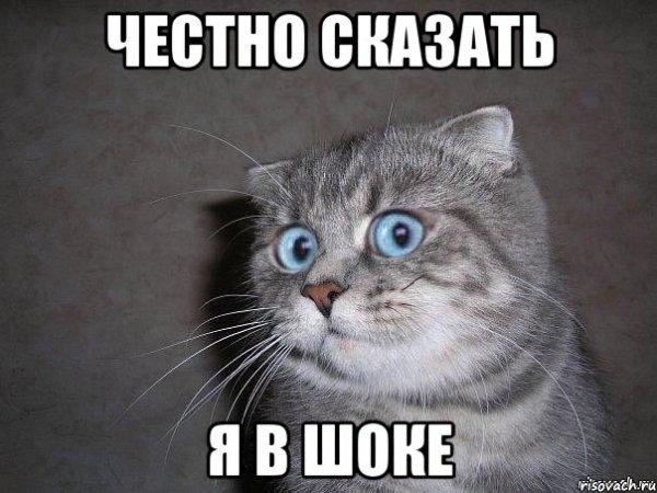 честно сказать я в шоке Мем удивлённый кот Рисовач Ру