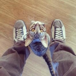 Gato que quer brincar de manhã