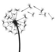 06.чёрно белые картинки для срисовки
