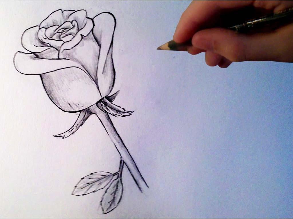 роза рисунок карандашом поэтапно