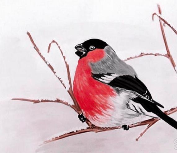 Birdfinch Birdfinch، الوصف وبعض الحقائق المثيرة للاهتمام