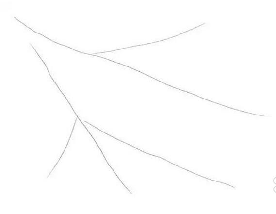 Bullfinch رسم مع قلم رصاص، وكيفية رسم فئة رئيسية على الفرع + الصورة 1