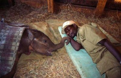 baby-elephant-care-metta