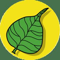 Foglia di Ficus Religiosa
