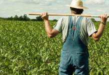 Un contadino al lavoro nei campi