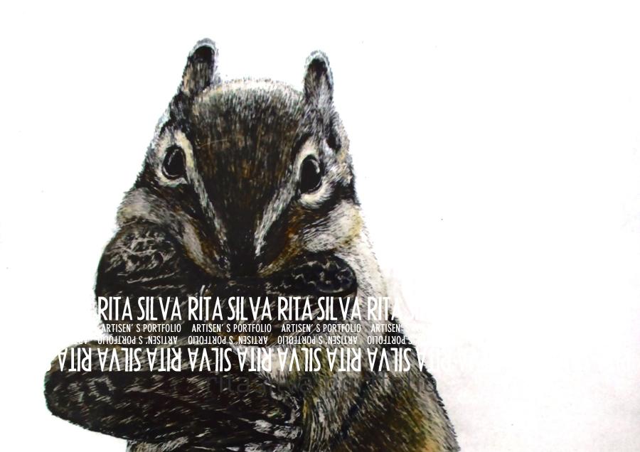 Squirrel Scraperboard & Watercolor Illustration
