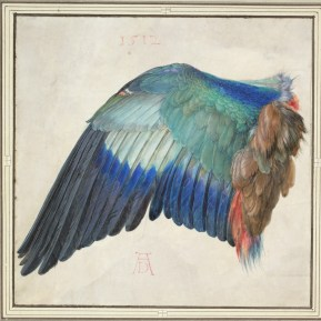 Albrecht Dürer, Left Wing of a Blue Roller, c. 1500 or 1512, watercolor painting