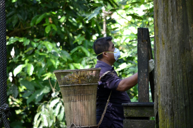 oranghi borneo
