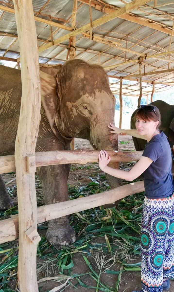 dove vedere gli elefanti in thailandia