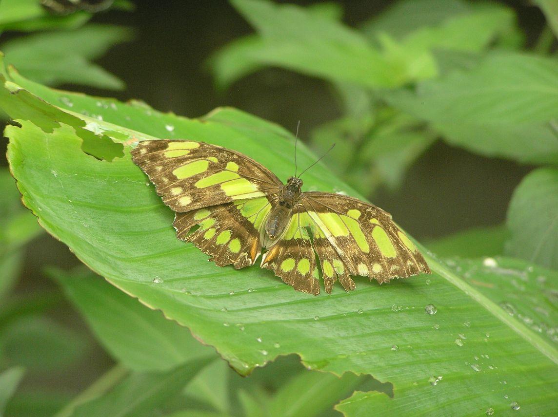 farfalle-bordano