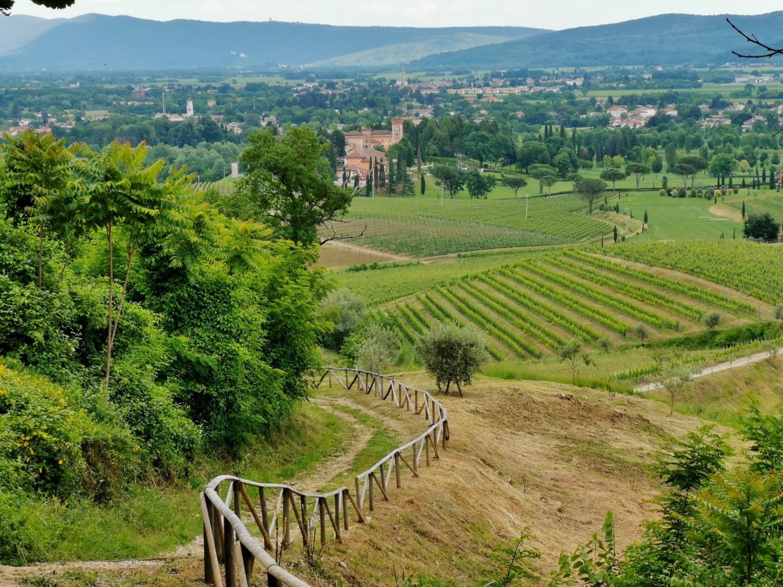 sentiero-vigne-alte
