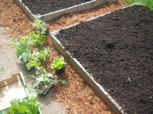 preparing to plant