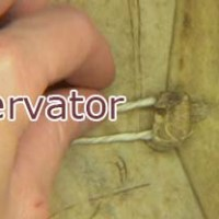 Profession: book and paper conservator