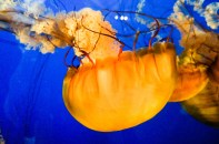 Van_Aquarium-7