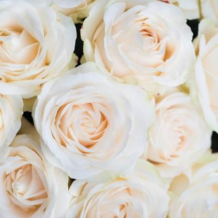 Baltų rožių žiedai