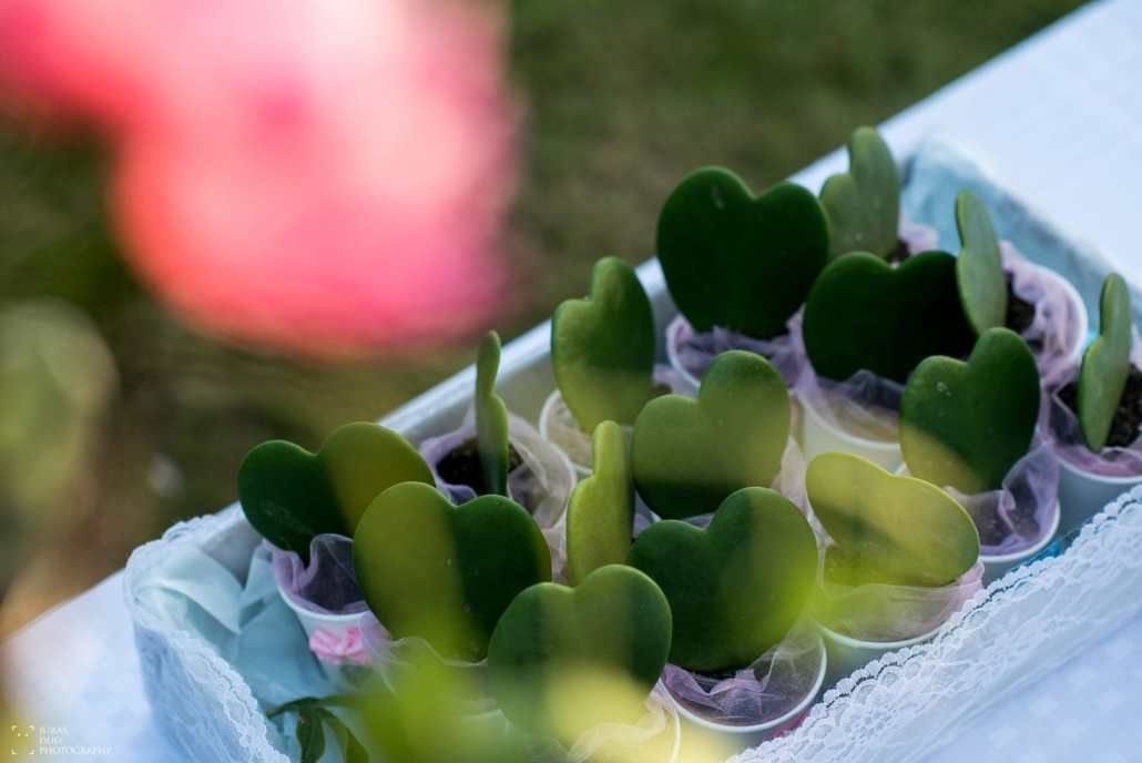 Širdelių formos gėlės vazonėliuose