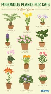 Katėms nuodingi augalai