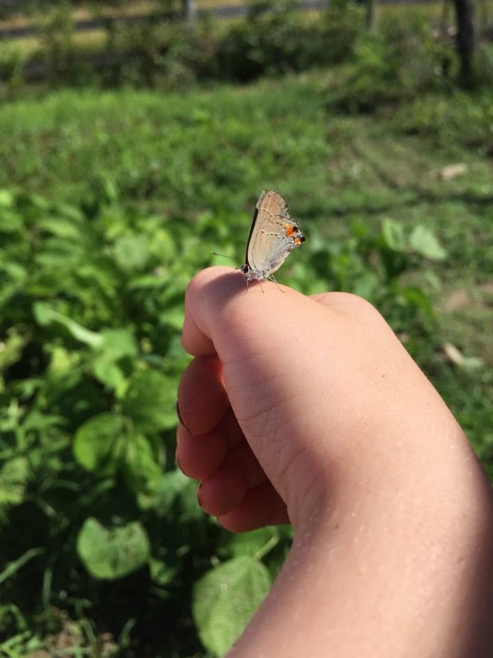 Moth Whisperer