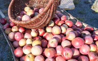Apfelfest für Jung und Alt – 24. Oktober 2020