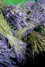 Rittergut Kleingera Lavendel getrocknet